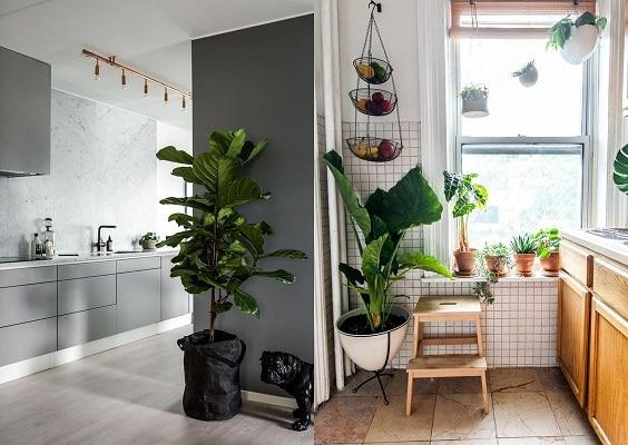 Cocinas Decoradas Con Plantas 2